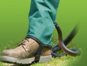 snakeprotex gaiter snake protection for snakes australia